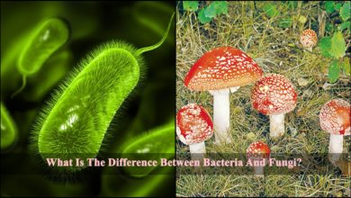 Difference Between Bacteria And Fungi